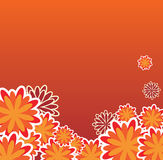 Orange floral backround Royalty Free Stock Photography