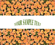 Orange Floral  border Stock Image