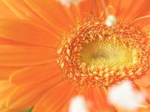 Orange floral dream Stock Images
