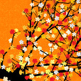 Orange floral tree print. Spring theme blossom tree background for print Stock Image