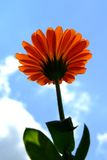 Orange flower. Worm's-eye view stock photo