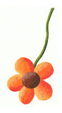 Orange flower Stock Photos