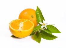 Orange with Flower Stock Photo