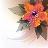 Orange flower. Beautiful decorative background with orange flower Royalty Free Stock Photography
