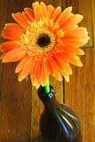 Orange Flower. In a wine bottle Royalty Free Stock Photos