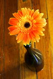 Orange Flower. In a wine bottle Royalty Free Stock Photography
