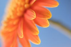 Orange flower. Side on view of orange flower with low depth of field Stock Images