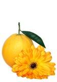 Orange and Flower. Orange with gerbera daisy on white background Royalty Free Stock Photos
