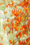Orange flower. Bush exotic bright orange flower, the strelitzia Stock Photo