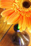 Orange Flower. In a wine bottle Stock Photo