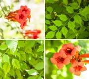 Orange Flower Royalty Free Stock Photos