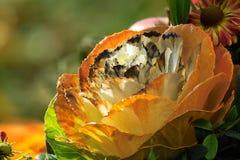 Orange flower. Close-up Royalty Free Stock Image