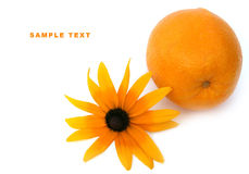 Orange and a flower. On a white background Royalty Free Stock Images