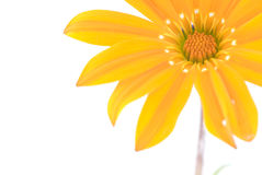 Orange flower. Abstract orange flower detail on white background Royalty Free Stock Photography