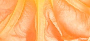 Orange flower. Close up on orange flower Royalty Free Stock Photography