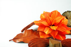 Orange Flower Royalty Free Stock Photos