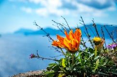 Orange flower with Amalfi Coast in the background, Italy stock images