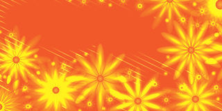 Orange flower banner Royalty Free Stock Image