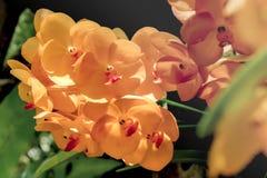 Orange flower. Stock Photography