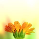 Orange flower on blurred background Stock Images