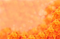 Orange flower with bokeh. Bright orange rose flowers over bokehlous background Stock Image