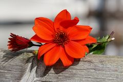 Orange flower bouquet Royalty Free Stock Photography