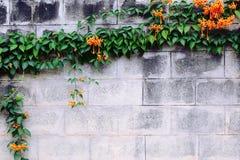 Orange flower with brick background Royalty Free Stock Photo