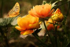 Orange Flower With Butterfly Stock Image