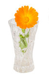Orange flower of Calendula officinalis Stock Photo