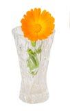 Orange flower of Calendula officinalis Stock Photo