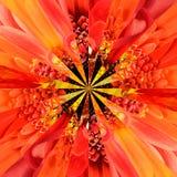 Orange Flower Center Collage Geometric Pattern Stock Image