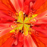 Orange Flower Center Collage Geometric Pattern Stock Photography