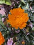 Orange flower close up stock image