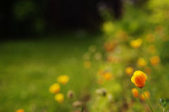 Orange flower on field. Summer day Stock Image