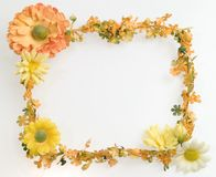 Orange flower frame Royalty Free Stock Images