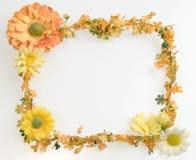 Orange flower frame Royalty Free Stock Images