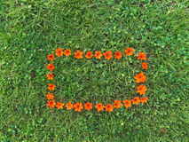 Orange Flower Frame On Green Grass Lawn Stock Photo