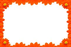 Orange Flower Frame on White background Royalty Free Stock Photos