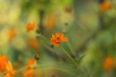 Orange flower. In the garden Stock Photos