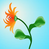 Orange flower Gerbera on blue sky background. Royalty Free Stock Image