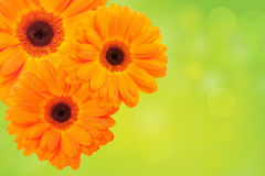 Orange flower on a green background Stock Images