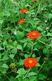 Orange flower Stock Photos