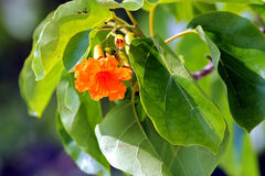 Orange flower and green leaves Stock Photos
