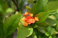 Orange flower green leaves plants Stock Photos