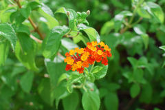 Orange flower and green leaves plants Stock Photo