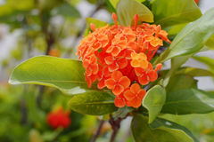 Orange flower and green leaves plants Stock Photography