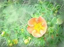 Orange flower with green plants background. Royalty Free Stock Photos