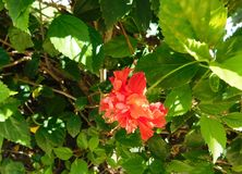 Orange flower among green vegetation at sunlight. A beautiful orange flower around green vegetation and leaves in the light of the sun on a park Royalty Free Stock Images