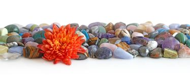 Lone flower head and healing crystals header. Orange Flower head placed at the front of a a neat selection of multicoloured healing chakra stones against a white stock images