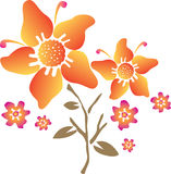 Orange flower illustration Stock Image